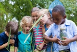 Nature Programs for Children